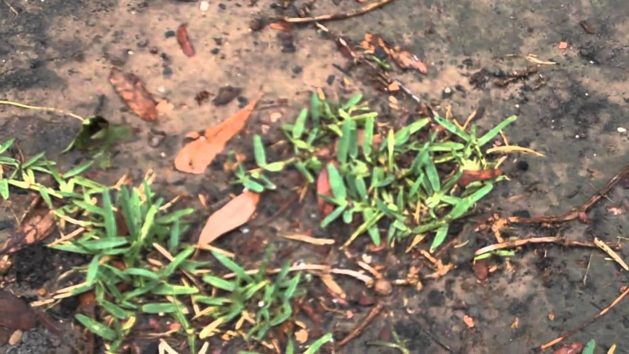 How To Transplant Grass Sarah Shah Reclaimed Garden