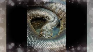 Giant Snake Was Found in Amazon Forest - The best on YouTube