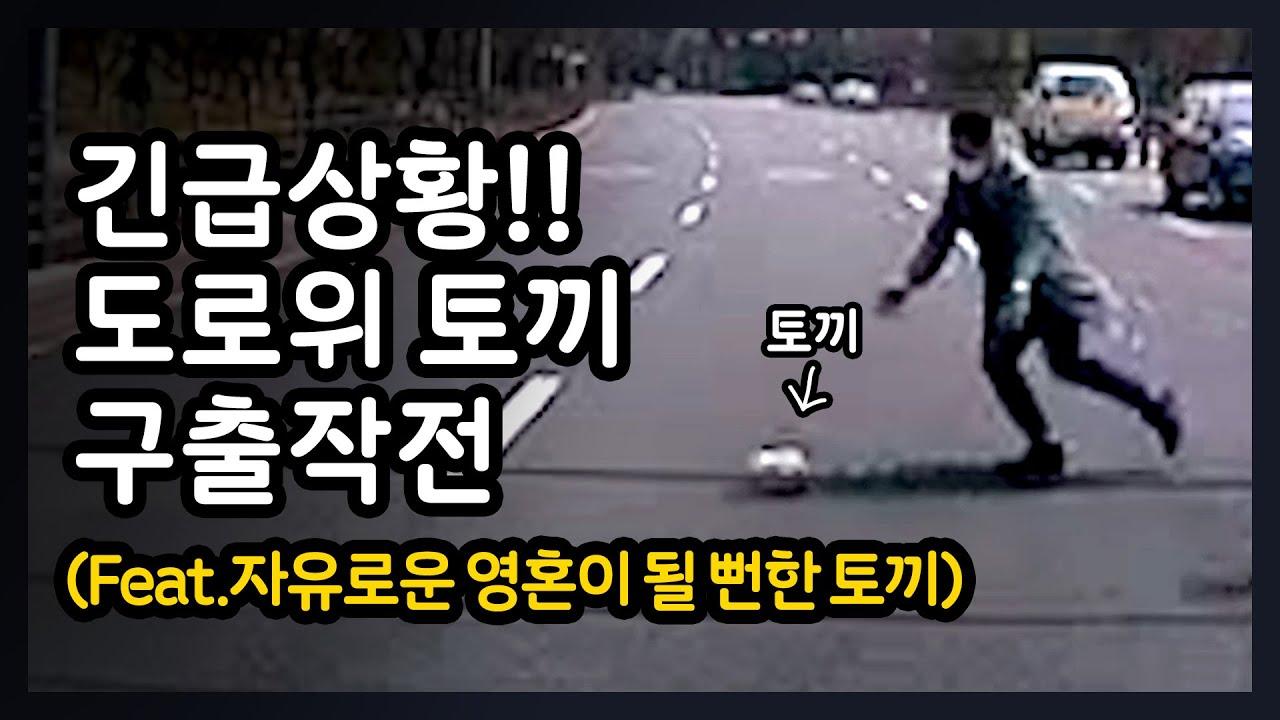 [사장님V-log]위기에 빠진 토끼 대구출 작전!!