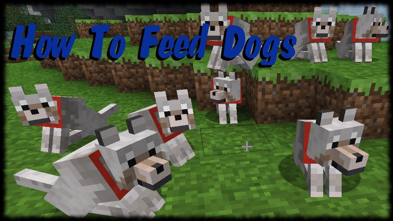Minecraft xbox 360 tutorial how to feed and take care of wolf dogs minecraft xbox 360 tutorial how to feed and take care of wolf dogs youtube ccuart Gallery