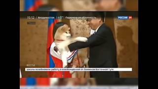 САМАЯ ЗНАМЕНИТАЯ СОБАКА В МИРЕ ПО ИМЕНИ МАСАРУ (АКИТА_ИНУ) 秋田犬 ザギトワ選手(16)