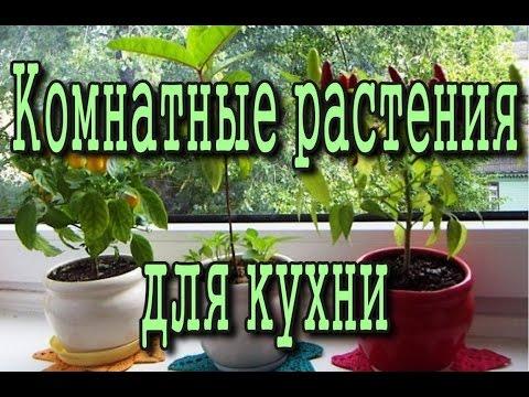 Сорняки Какие растения и цветы? Полезные сорняки