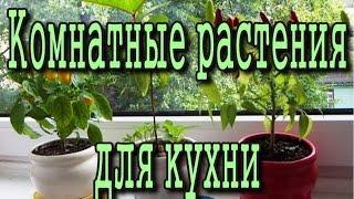 Какие комнатные растения подойдут для КУХНИ(, 2015-04-29T15:23:41.000Z)