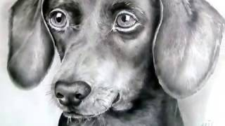 Портрет таксы/Portrait of a Dachshund