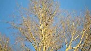 4. Весна | Франц Шуберт - Вальс цветов | Голубое небо
