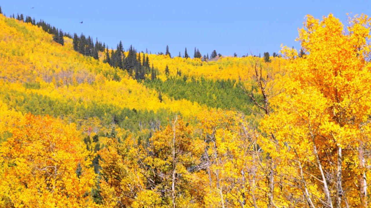 Fall Aspens Wallpaper Colorado Fall Colors 2012 Youtube