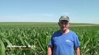 EkoBooster MAX na psenici i kukuruzu , Svetozar Miletic 2018. Poljoprivreda - ratarstvo