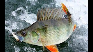 Ловля окуня на блесну Рыбалка у скалы на Онежском озере
