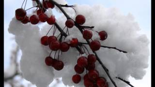Tori Amos - Snow Cherries from France Lyrics in description