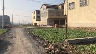 安徽阜阳 实拍分家后的皖北农村,儿女住洋楼,老人只能住这里了