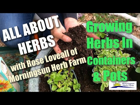 """3/8: Growing Herbs in Containers & Pots – Morningsun Herb Farm's 8-video series """"ALL ABOUT HERBS"""""""