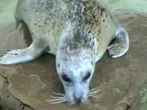 Seals Splashing Being Cute