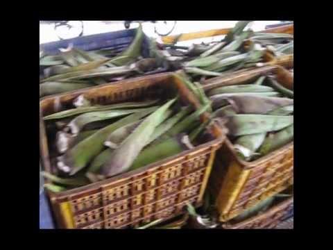 AloveBali Aloe Vera Fertilizer Overview