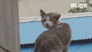 나는 사람을 좋아하던 고양이였습니다 ㅣ Cat With A Spike Lodged In The Head Is Lost In The Street