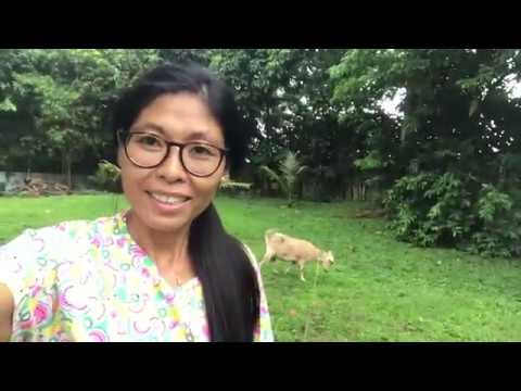 Vlog71: FILIPINA GERMAN LIFE IN THE PHILIPPINES | ARE PUR GOATS PREGNANT? SIGNS GOAT WILL HAVE KIDS