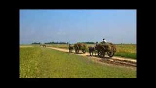 Amar Sonar Bangla - Rabindrasangeet - Manna Dey & Chorus