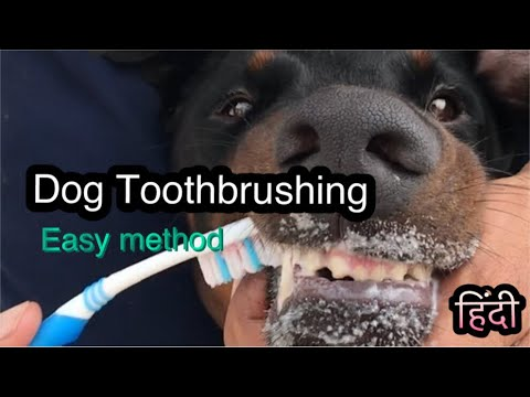 Dog toothbrushing and tooth care is essential for good health. Hindi