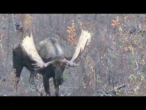 Macmillan Monster, Yukon moose hunt