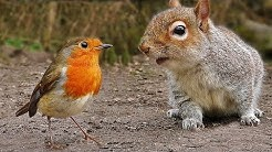 Videos für Katzen Zum Spielen : Vögel und Eichhörnchen