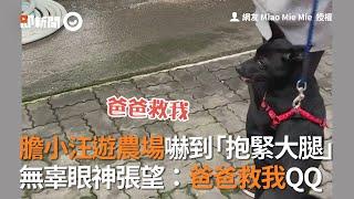 膽小狗遊農場被其他動物嚇到!無辜抱緊大腿:爸救我QQ|寵物|黑狗