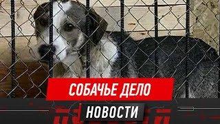 Депутаты просят защитить людей от нападений животных