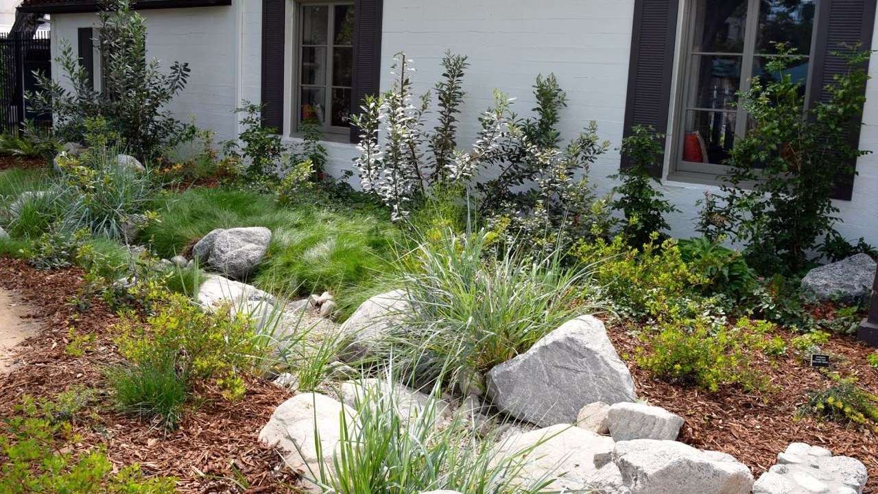 mix of dry shade plants - california