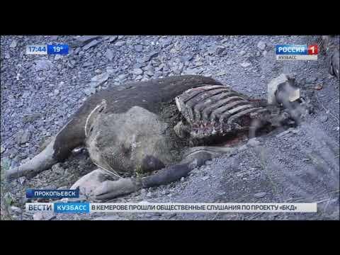 """В Прокопьевске люди и животные пропадают в """"черной дыре"""""""