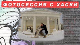 Фотосессия с Хаски в Москве. Аренда Хаски. Как круто быть владельцем сибирской Хаски!