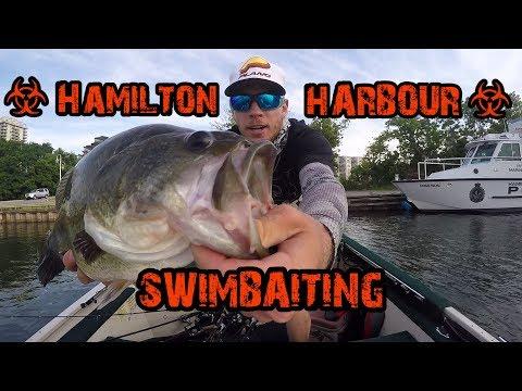 We got KICKED OUT | Hamilton Harbour Swimbait Fishing
