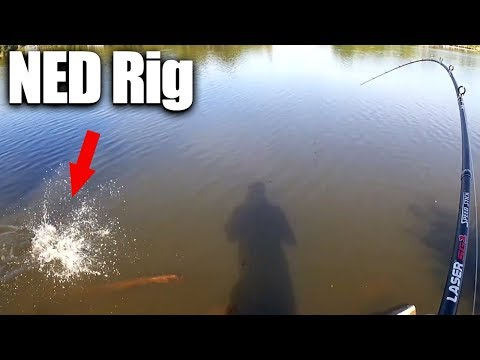 Bank Fishing with a NED Rig and How I Caught a Bass - Finally!