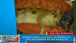 BP: Baboy, kasa-kasama sa bahay at tila miyembro na ng pamilya