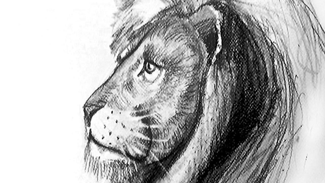 Comment Dessiner Un Lion Réaliste