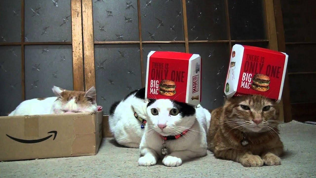 Funny Cat Videos Hilarious