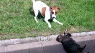 Кошки против собак. Подборка Топ 7