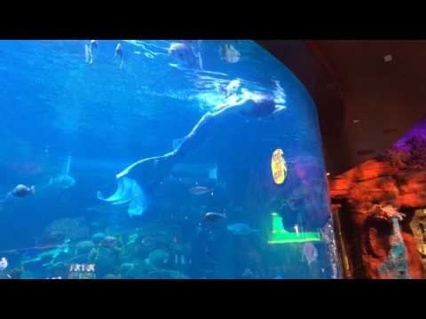 Mermaid Fish Tank Las Vegas 2016
