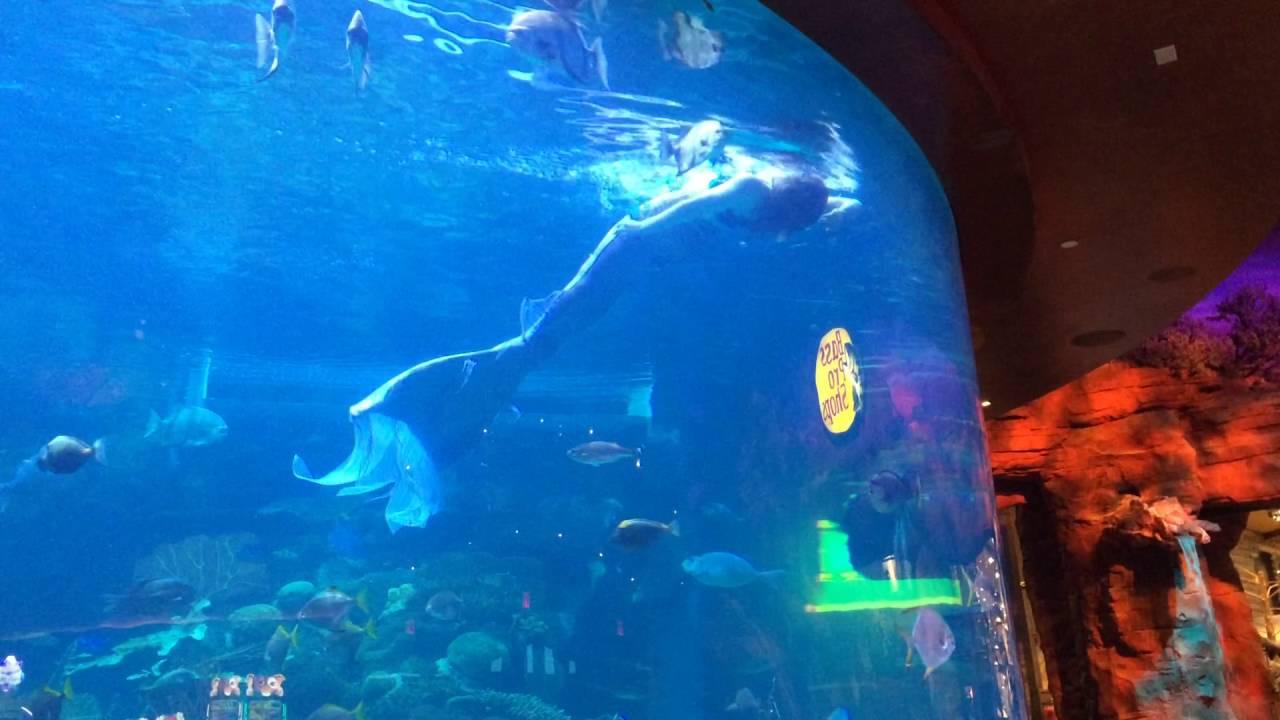 Mermaid fish tank las vegas 2016 youtube for Fish tank las vegas