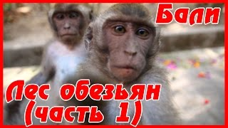 Сказочное БАЛИ - лес обезьян в Убуде: ТОП место на Бали. Цены на отель в Убуде | #13