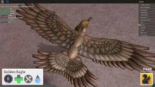 ROBLOX Bird Simulator: The Quest for the Snowy Owl Ep 1: The Golden Eagle