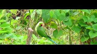 canon Powershot SX160 IS  Test Video - Nature