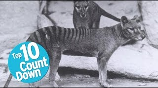 Top 10 Extinct Animals