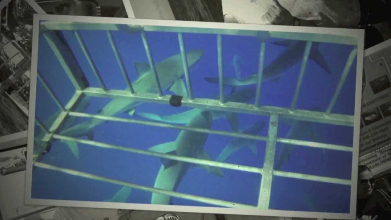 Escapades with Andria Lea | North Shore Shark Adventures Cage Dive