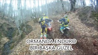 Enduro: in the forest