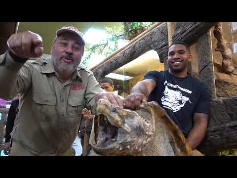 Reptile Room Tour January 2018 with Giant Snapping Turtle