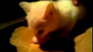 муся кошки коты приколы ржака смеялась до слез порно смотреть всем до конца