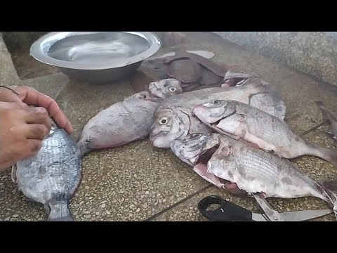 amazing-sargo-fish-cleaning