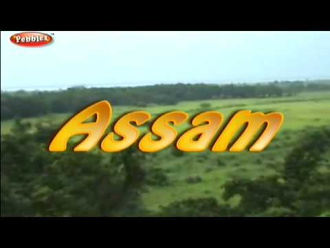 Kaziranga National Park in Assam | East India Tourism in Hindi | Tourist Places to Visit