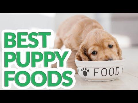 Best Puppy Food 2019 - 10 TOP Puppy Foods