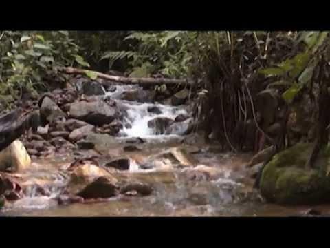 Proyecto ambiental SERRANÍA DE LOS YARIGUIES