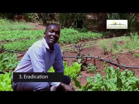 Agriculture: Pests & Diseases - Kenya