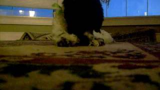 My dog and catnip